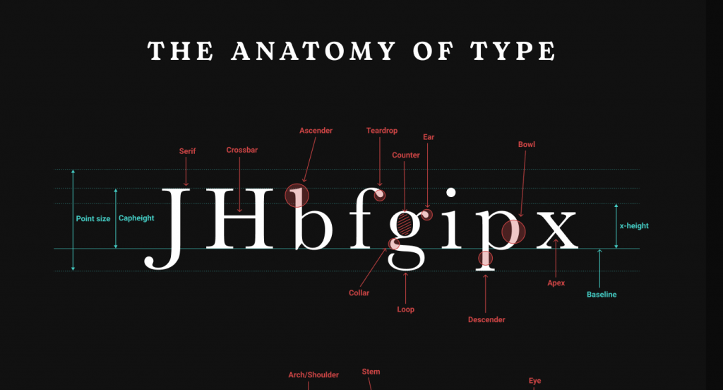 an infographic displaying some letters in a serif font, with specific elements of the letters labelled with descriptions, from 'The Basics of Typography' by Maxime Rabot